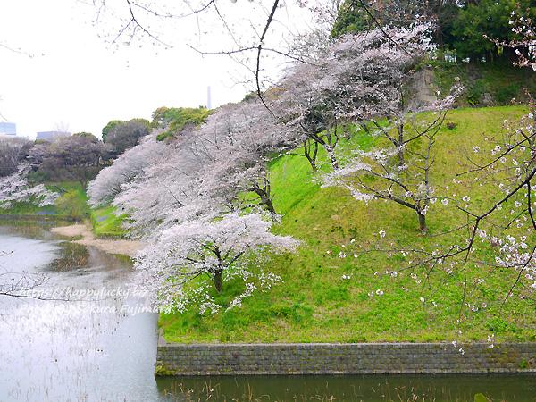 【桜2019】千鳥ヶ淵周辺 お堀の桜 その1