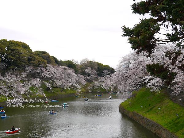 【桜2019】千鳥ヶ淵周辺 お堀の桜 その2