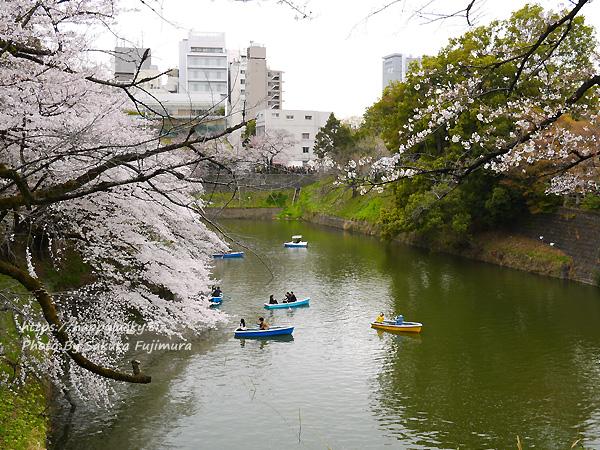 【桜2019】千鳥ヶ淵周辺 お堀の桜 その3