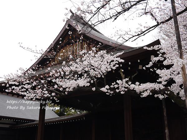 【桜2019】靖国神社 桜