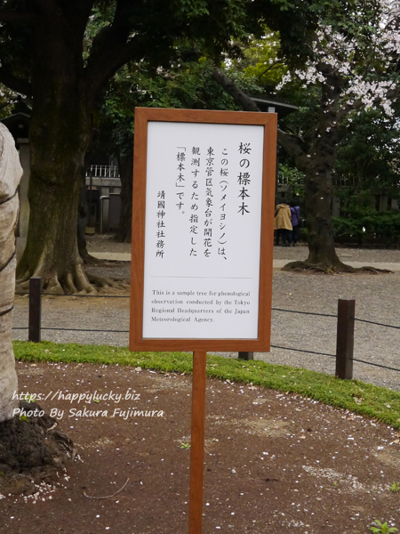 【桜2019】靖国神社 ソメイヨシノ 桜の標本木の立札