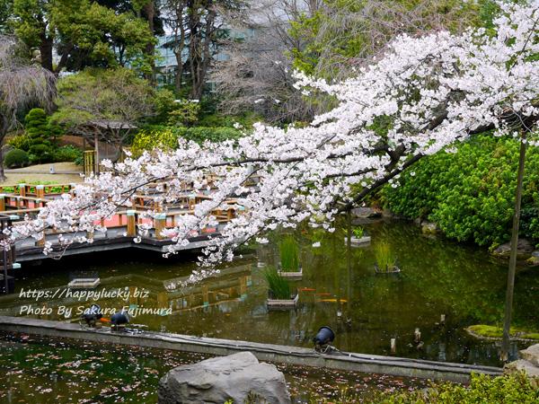 【御朱印巡り】原宿 東郷神社 庭園の池