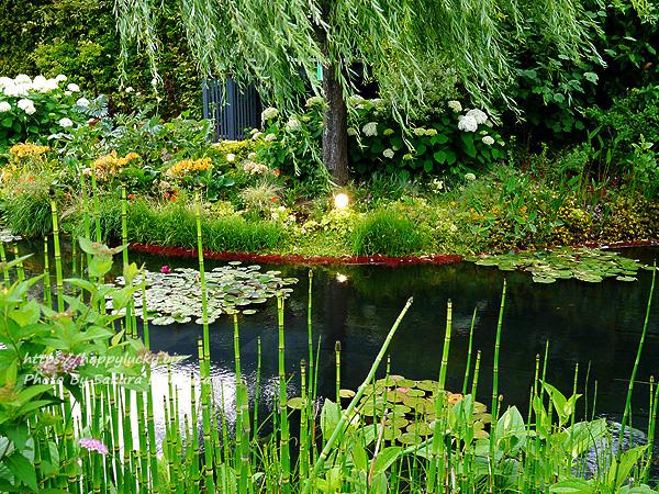 西武池袋本店屋上空中庭園 モネの庭「睡蓮の池」その2