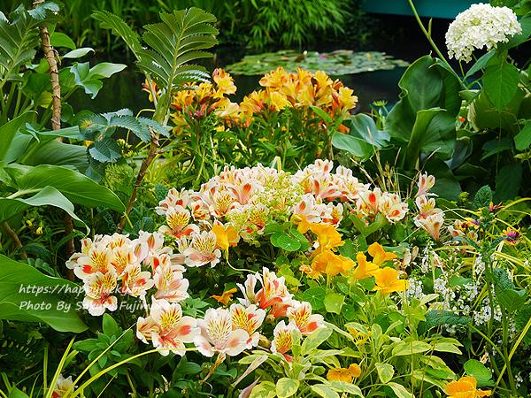 西武池袋本店屋上空中庭園 モネの庭「睡蓮の池」その4