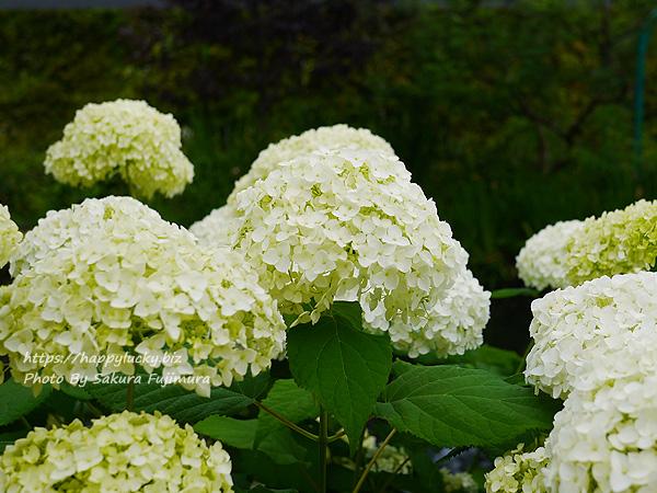 西武池袋本店屋上空中庭園 モネの庭「睡蓮の池」その5