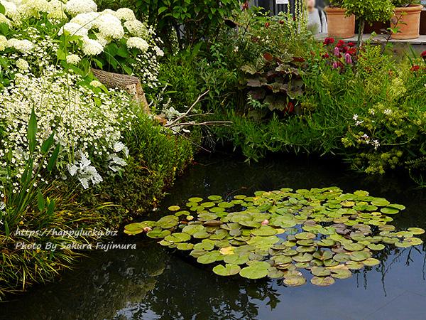 西武池袋本店屋上空中庭園 モネの庭「睡蓮の池」その7