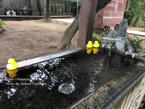 千葉県柏市 柏諏訪神社 手水舎のアヒル1