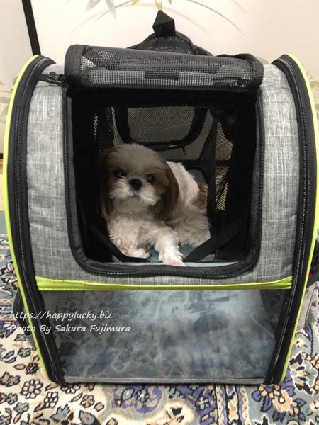 ペキュート[Pecute] ペットキャリーバッグ リュック 拡張してすごくくつろいでいる愛犬シーズー