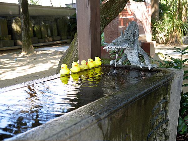 千葉県柏市 柏諏訪神社 2019年11月 手水舎のアヒルたち