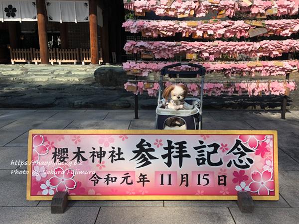 【櫻木神社】愛犬と七五三の季節に参拝その1<千葉県野田市>