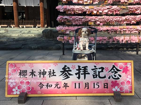【櫻木神社】愛犬と七五三の季節に参拝その2<千葉県野田市>
